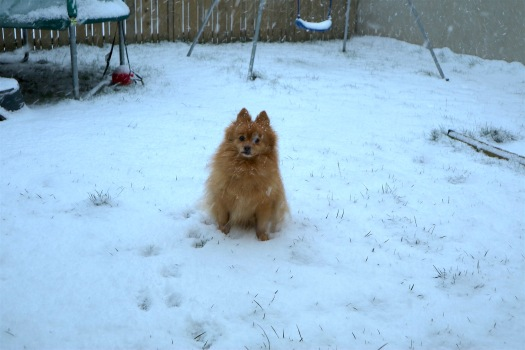fender snow