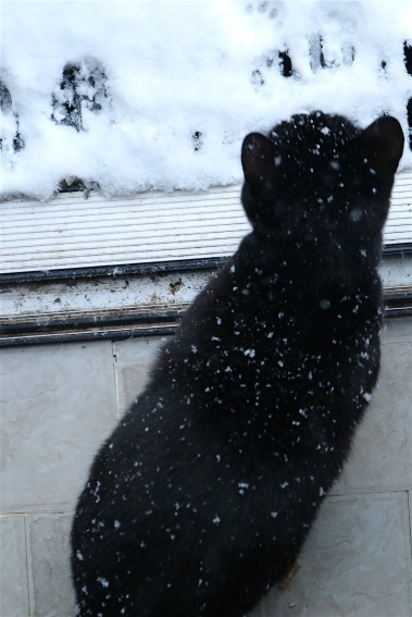 onyx snow